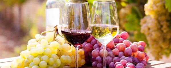 Elaboration de vin de buzet